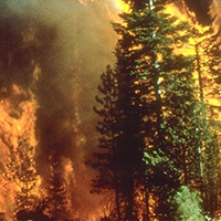 Wildfire_in_California Daedalus Trust hubris syndrome